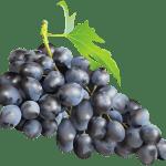 Imagem de Frutas – Uva Roxa 4 PNG