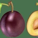 Imagem de Frutas – Ameixa 3 PNG