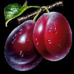 Imagem de Frutas – Ameixa 5 PNG