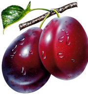 Imagem de Frutas - Ameixa 5 PNG