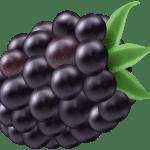 Imagem de Frutas – Amora 4 PNG
