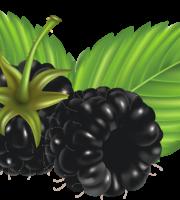 Imagem de Frutas - Amora 6