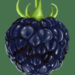 Imagem de Frutas – Amora PNG