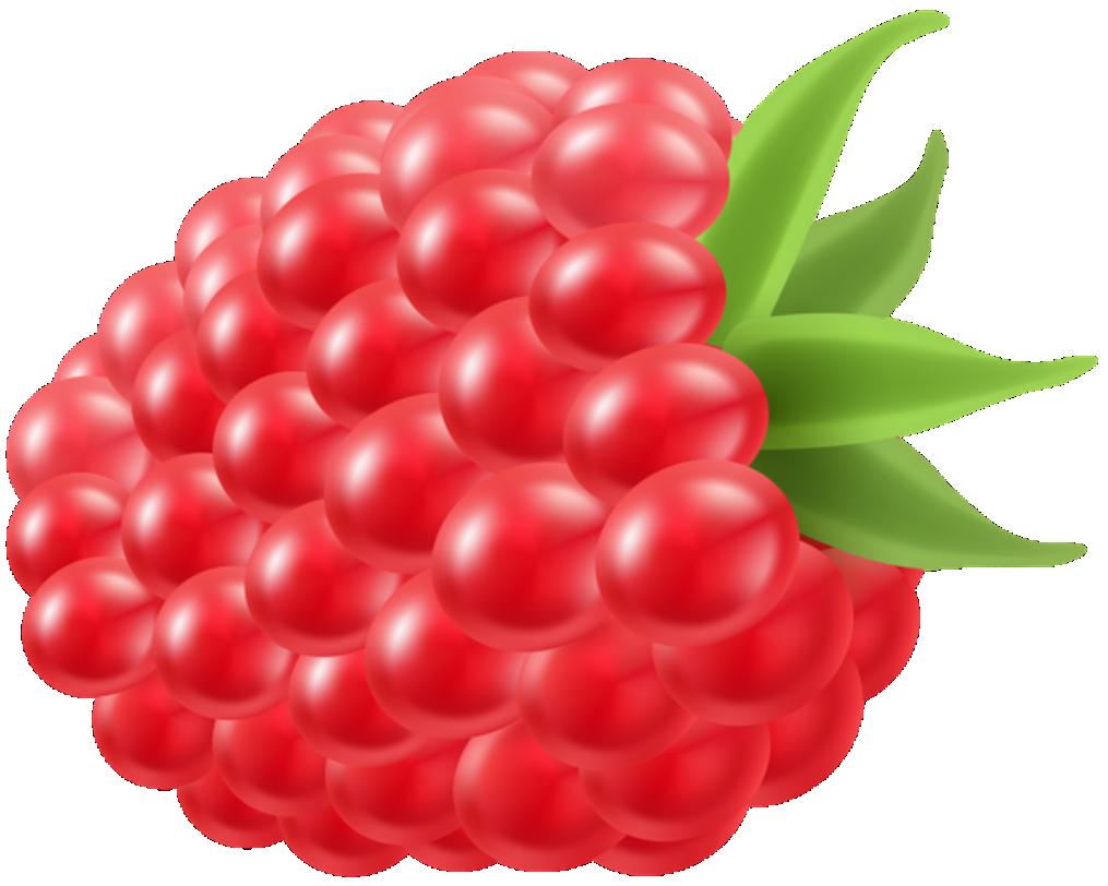 Imagem De Frutas Framboesa 5 Png Imagens E Moldes Com Br