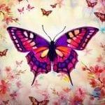 História Infantil – O segredo da borboleta