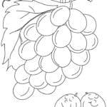 Desenhos de Uvas para colorir e imprimir