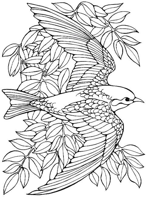 Desenhos Para Colorir De Animais
