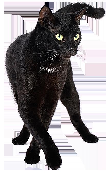 Imagem Cat PNG - Gato Preto em PNG de alta resolução